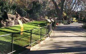 Un hombre se mete en el recinto de los leones del Zoo de Barcelona