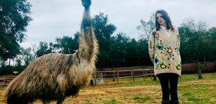 Post de Aldo Comas y Macarena Gómez, encierro entre cerdos, perros, alpacas y emus