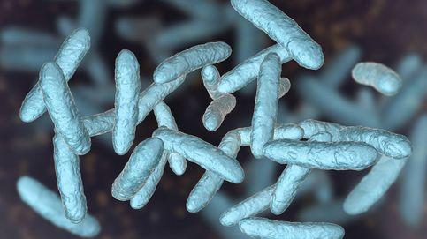 Un estudio señala que la microbiota podría ayudar a perde peso