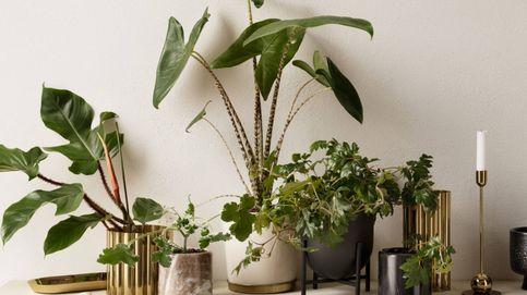 H&M Home decora nuestras estanterías con estas nuevas macetas para plantas