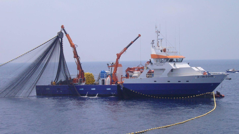 El cerquero 'Nuevo Panchilleta' del Grupo Fuentes en plena pesquería de atún rojo. (ICIJ)