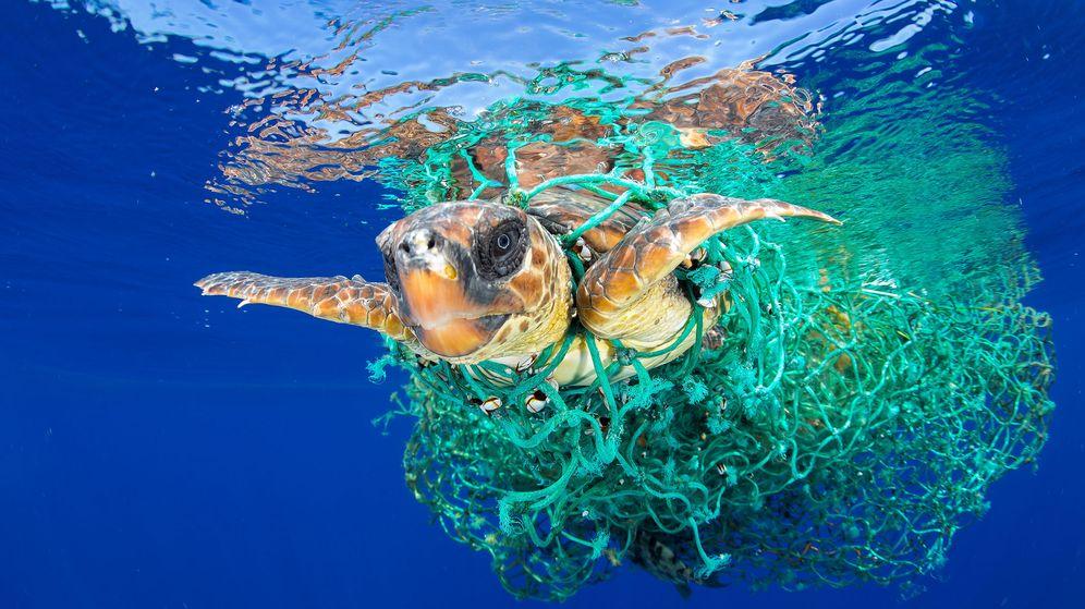 Image result for problema de los plasticos CETÁCEOS