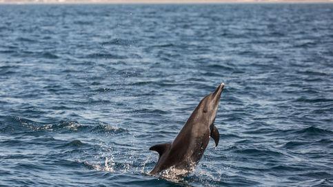 Delfines en Guatemala