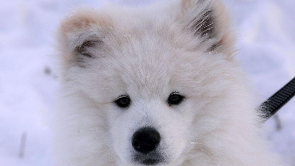 Investigan a una asociación de animales por traficar con perros y maltratarlos