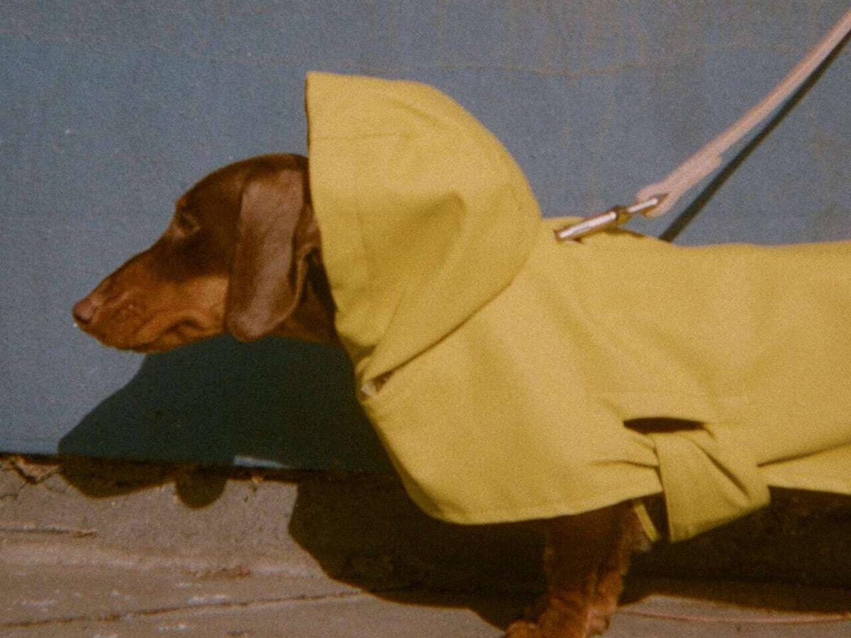 Foto: Descubre cómo es la nueva colección de Zara para vestir a tu perro. (Cortesía)