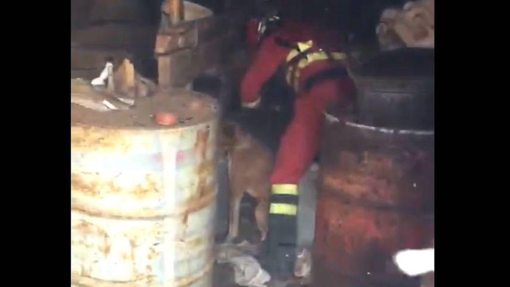 Foto: Un miembro de la UME intenta liberar a un perro encadenado en medio del incendio de Gran Canaria