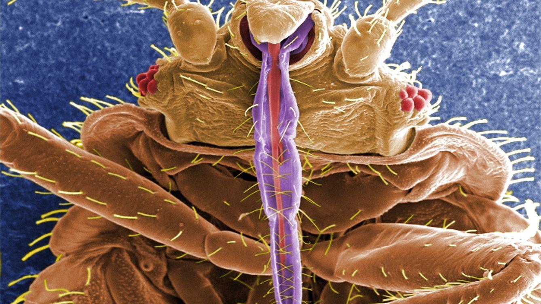 Nuestros antepasados ya sabían cómo luchar contra los insectos hace 200.000 años