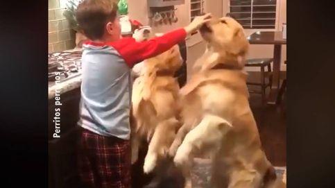 Encarga a su hijo cuidar de los perros y se encuentra una escena adorable