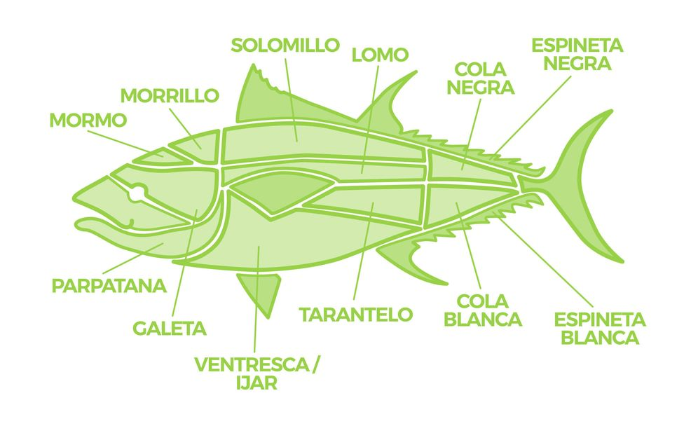 Foto: Los cortes del atún rojo. (Ilustración: Alexandra Nikolaeva)