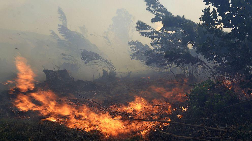Cantabria amanece libre de incendios tras seis días con más de 200 fuegos