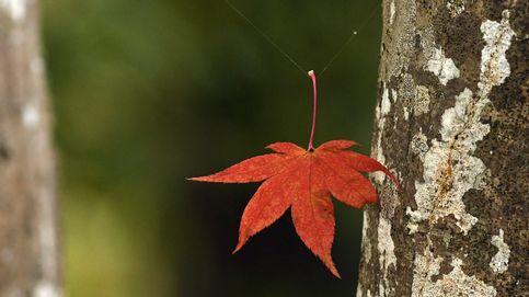 Kioto se visite de otoño