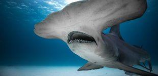 Post de Discovery Channel vuelve a llenarse de tiburones con el contenedor 'Shark Week'