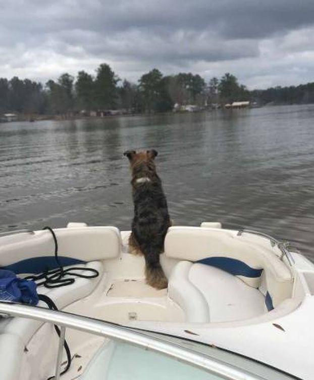 Foto: Lola, la perra que encontró Brooks.