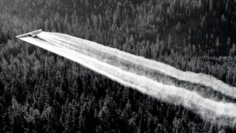 Un avión espolvorea insecticida DDT. (Wikimedia Commons)