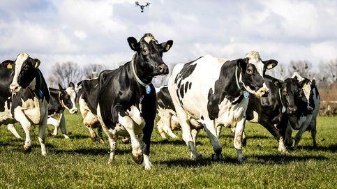 Nueva Zelanda anuncia una misión de control espacial para rastrear los eructos de vacas