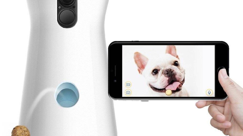 Una cámara para tener vigilada y entretenida a tu mascota. (Foto: Furbo)