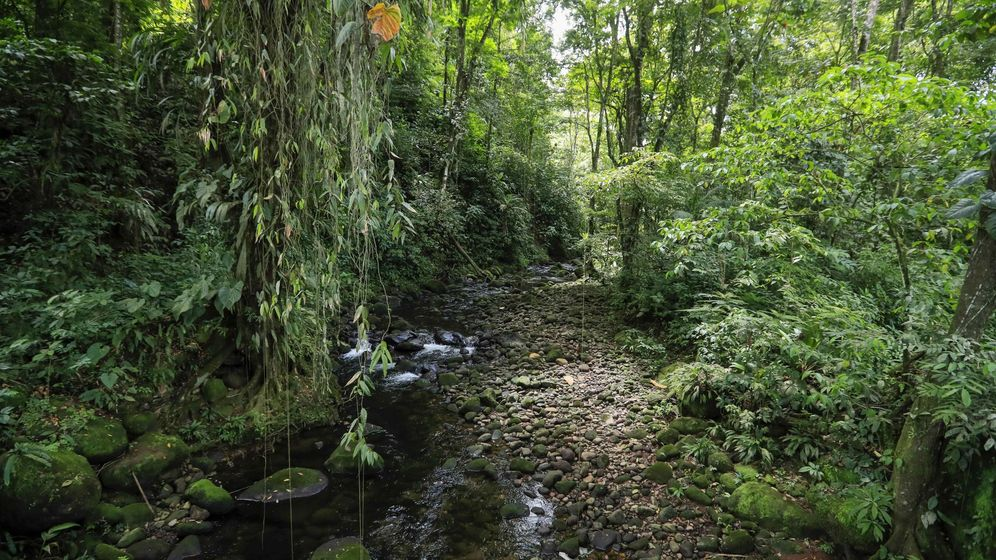 Foto: Bosque tropical.