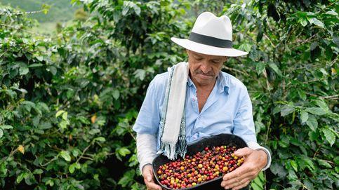 Café de Colombia: por qué un producto de prestigio ha entrado en crisis