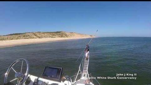 Graban el violento ataque de un tiburón blanco a una foca