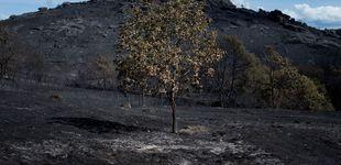Post de Más de 9.000 hectáreas arrasadas en 4 días por una docena de incendios en Ourense