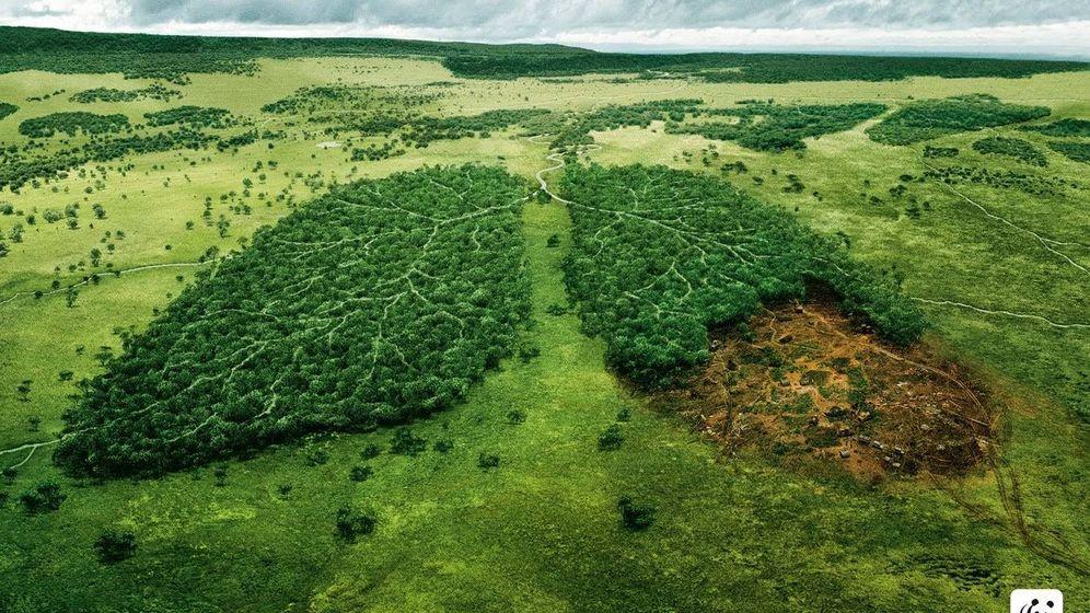 Foto: Imagen de la campaña de WWF contra la deforestación