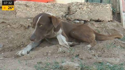 Un perro visita cada día la mina en la que su dueño murió en un accidente