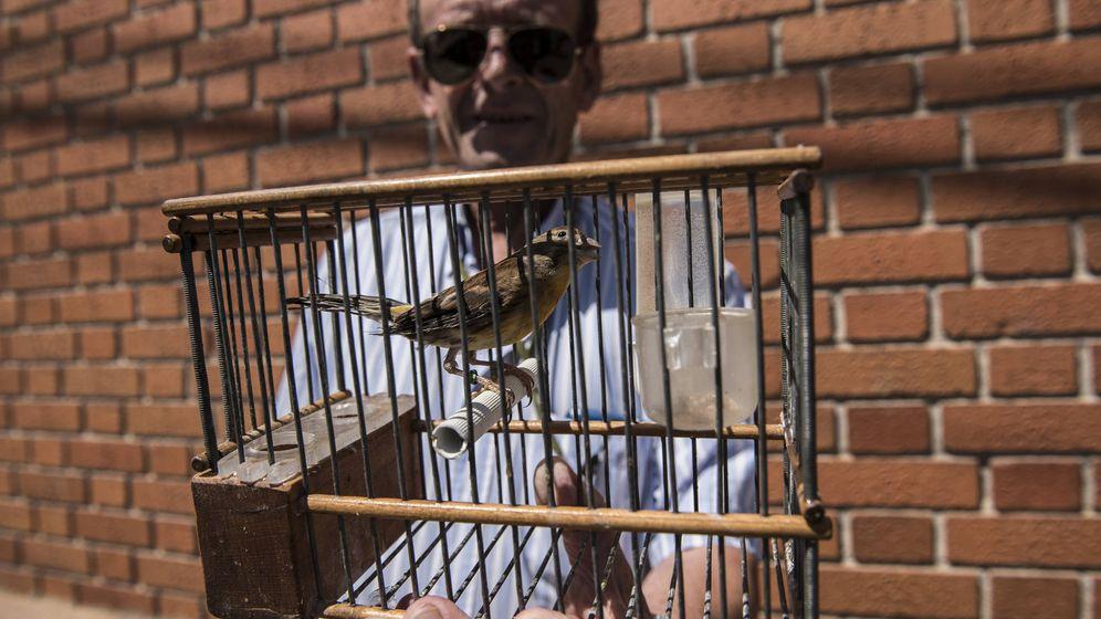 Foto: Juan de Dios, delegado nacional de silvestrismo en España, sujeta uno de sus pájaros para adiestramiento. (N. L. P.)