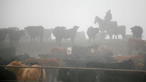 Cowboy en la niebla