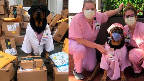 Loki, la perra de terapia que ayuda a los sanitarios durante la pandemia