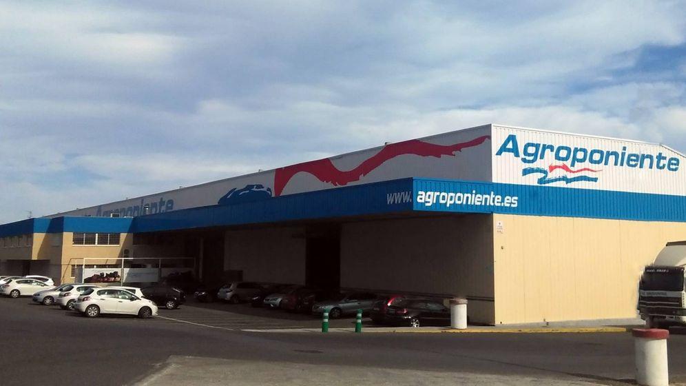 Foto: Instalaciones de Agroponiente en Almería. (Agroponiente)