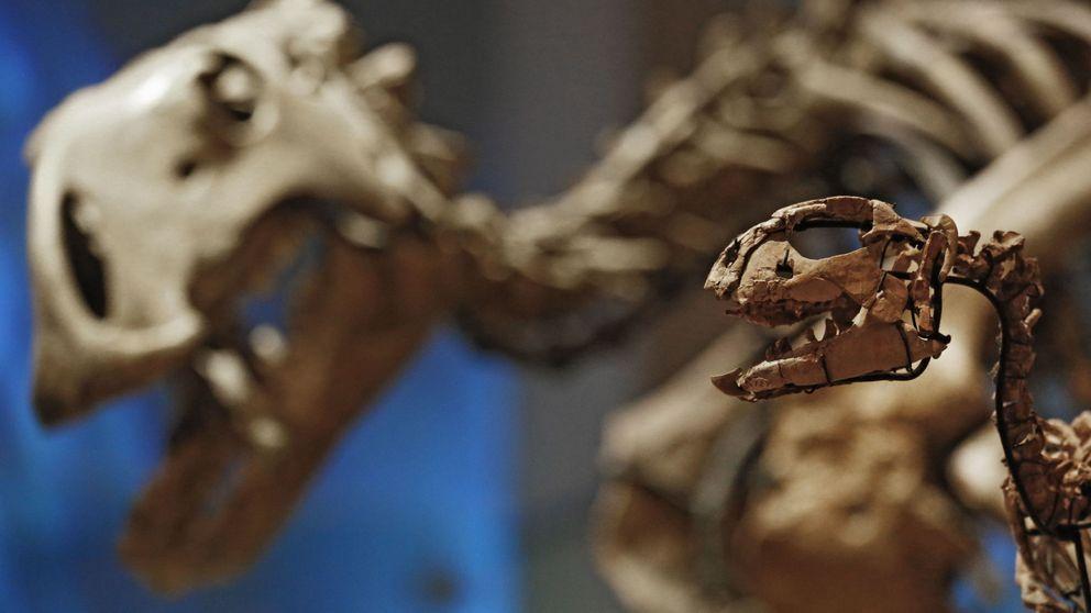 Contempla con tus propios ojos el descubrimiento de un nuevo dinosaurio