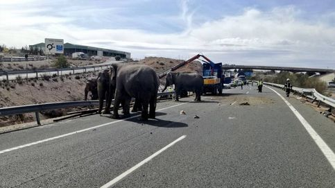 Fallece un elefante y otros dos heridos por el vuelco de un camión en la A-30
