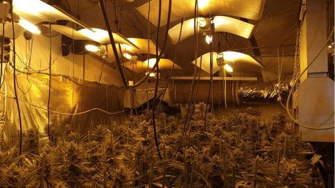 Cuatro detenidos en Almería con 700 plantas de marihuana, armas y munición
