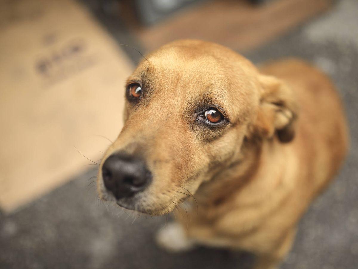 Foto: Un perro abandonado. (iStock)