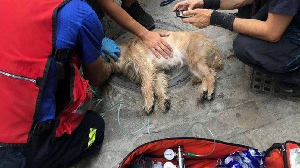Foto: Los bomberos, en el momento en el que reanimaban al perro (Foto: Facebook Emergencias Sevilla)
