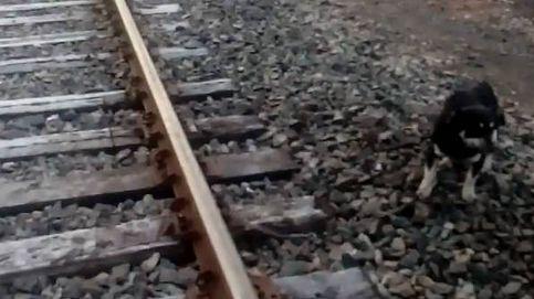 Un maquinista salva a un perro atado a las vías del tren deteniendo la locomotora