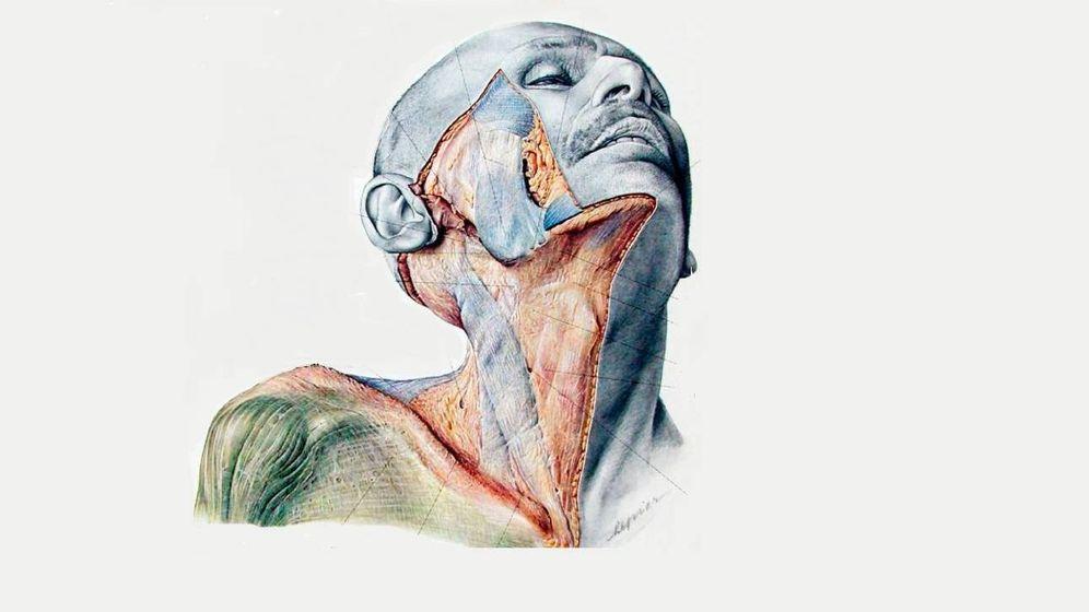 Foto: Un dibujo del atlas de anatomía de Pernkopf. (Erich Lepier)