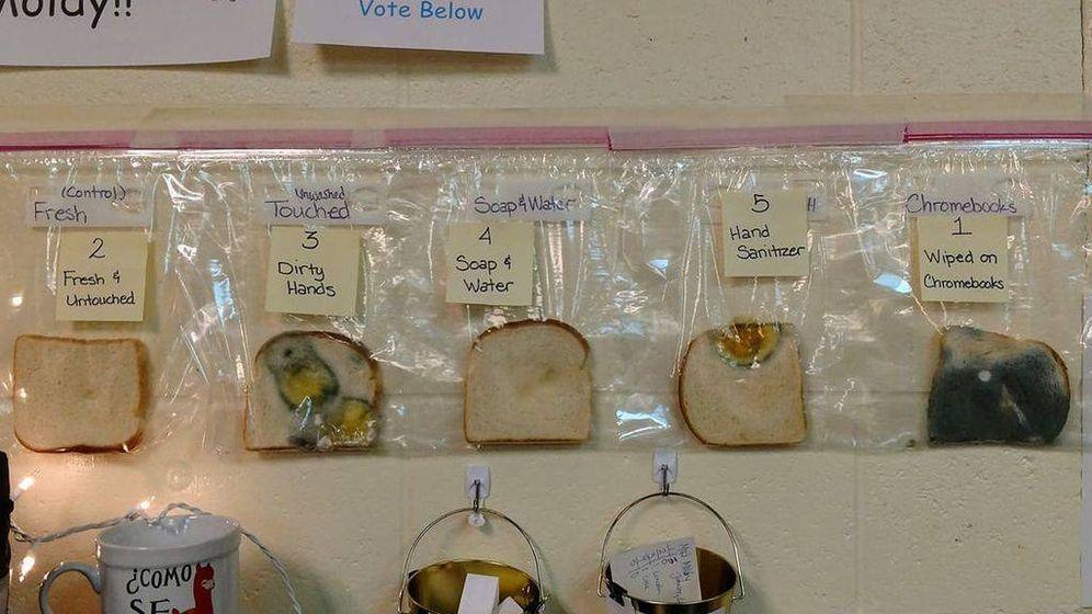Foto: Rebanadas de pan del experimento. (Facebook)
