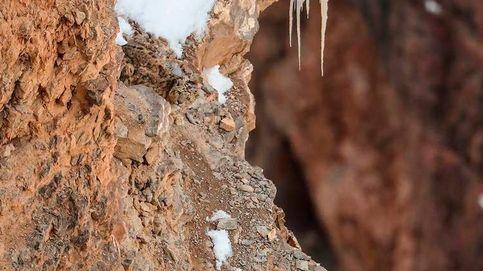 Reto viral: ¿eres capaz de encontrar al leopardo camuflado en esta foto?