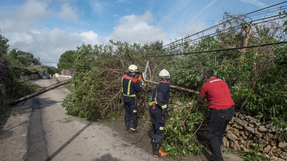 Foto: Efectivos del cuerpo de bomberos retiran un árbol caído en la zona de la urbanización La Argentina, municipio de Alaior en Menorca, tras el fuerte viento registrado este domingo. (EFE)