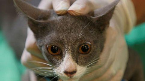 El lado oscuro de trabajar como veterinario