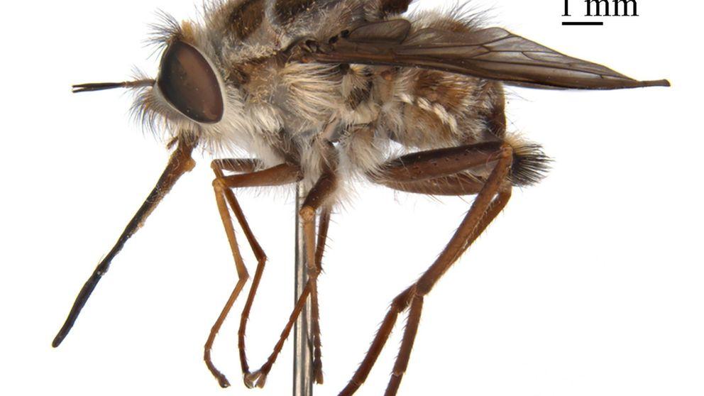 El 'Rey de la Noche', la mosca de 'GoT' que convierte en zombis a sus víctimas