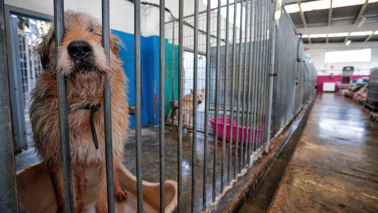Los Refugios De Animales Al Borde Del Colapso En España Tras El Confinamiento