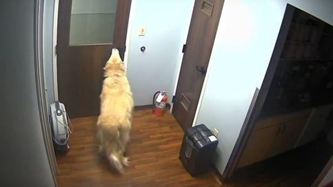 La gran evasión (canina)