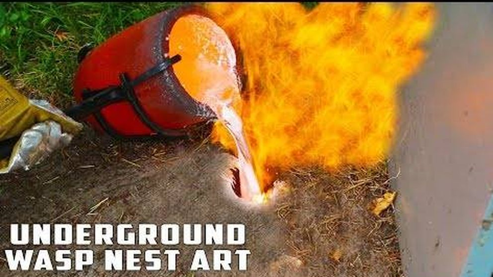 ¿Tienes un nido de avispas? Esta es la solución más radical