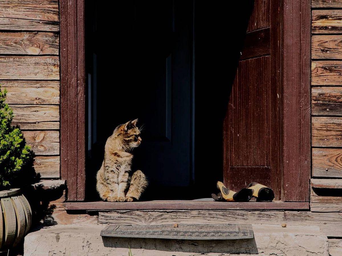 Foto: Las mejores casas para gatos (Pixabay)