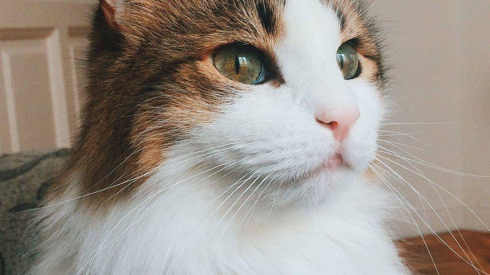 Por qué un gato es el mejor compañero de piso que puedes tener