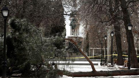 El juez archiva la causa por la muerte de un niño al caerle un árbol en el Retiro