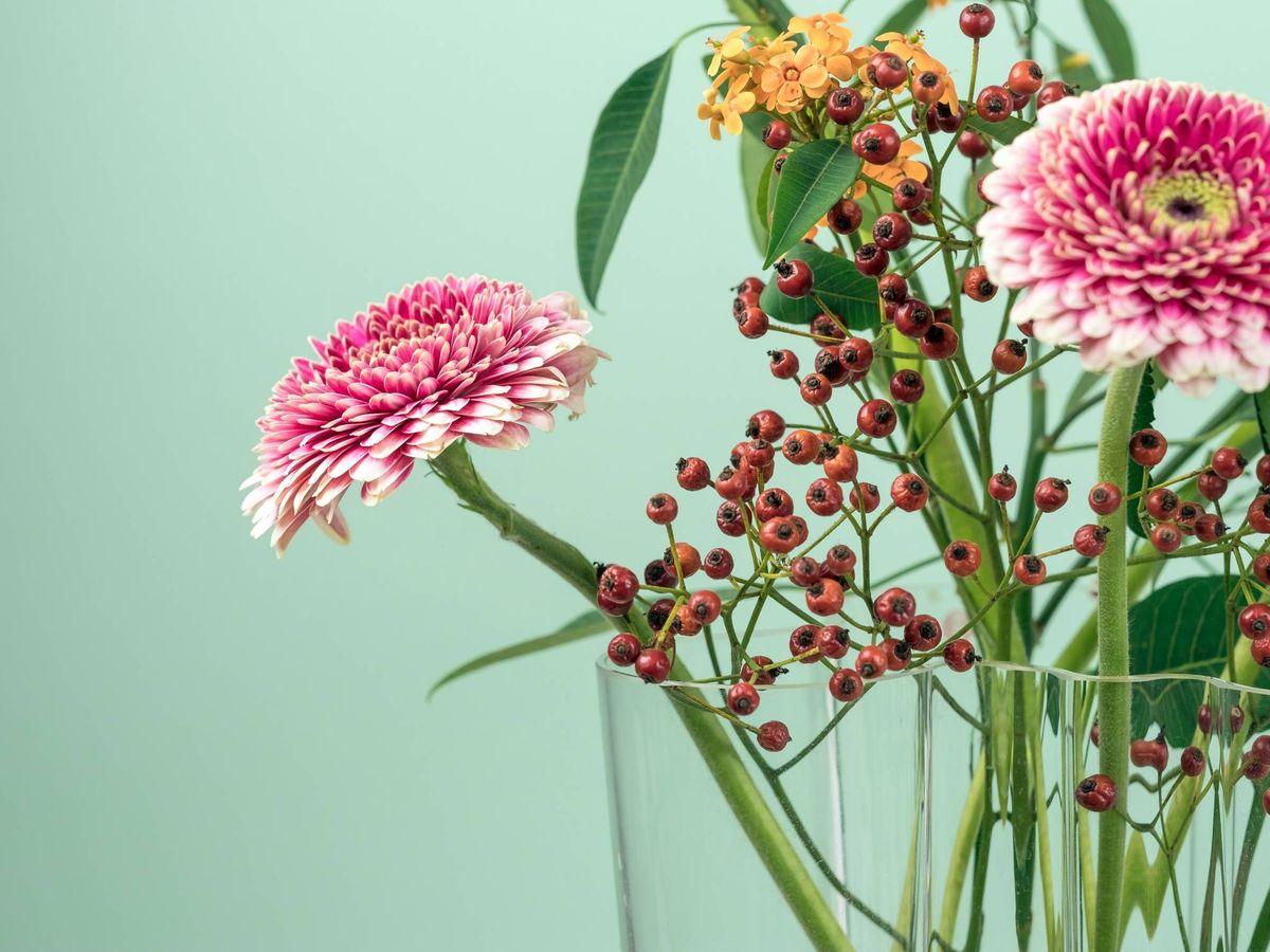 Foto: Plantas para atraer la energía positiva en casa. (Maarten Deckers para Unsplash)