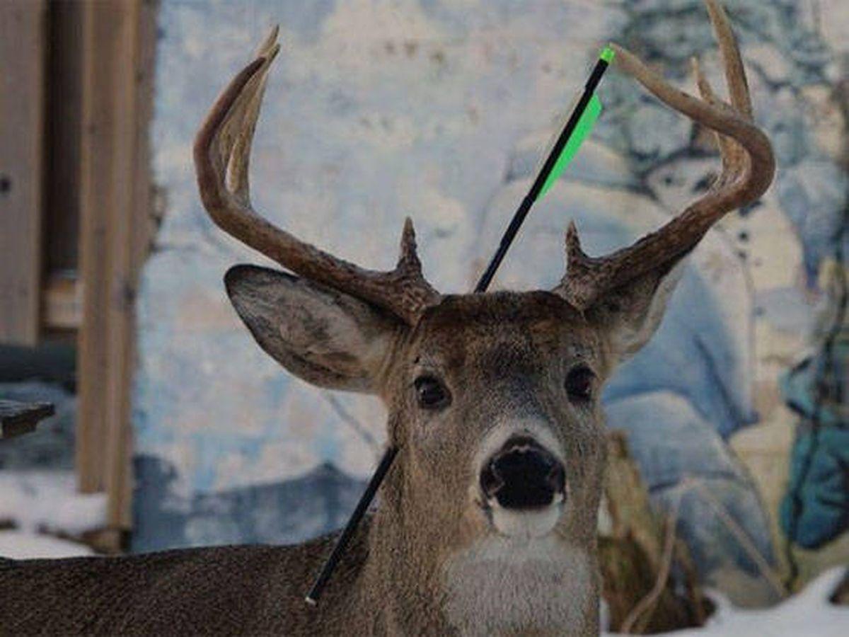 Foto: Carrot apareció con una flecha clavada en la cabeza (Foto: Twitter)